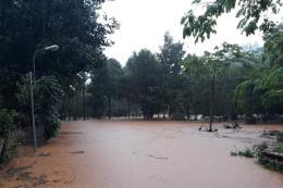 Giải cứu 2 người mắc kẹt trên cây giữa dòng nước lũ