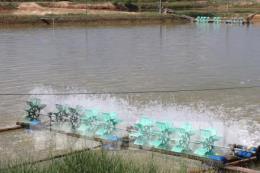 Ứng dụng công nghệ nuôi trồng hải sản bền vững: Bài 1-Xu hướng tất yếu