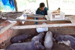 Vốn tín dụng chính sách giúp nông dân Quảng Nam cải thiện đời sống
