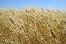 Nhật Bản cân nhắc về đề xuất mua nông sản từ Mỹ