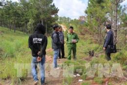 Lâm Đồng bắt giam 6 đối tượng về hành vi hủy hoại rừng