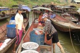 Sơn La phát triển mô hình chế biến nước mắm từ cá nước ngọt lòng hồ sông Đà