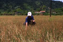 Nhiều giải pháp phòng, chống hạn hán, xâm nhập mặn mùa khô 2019 - 2020
