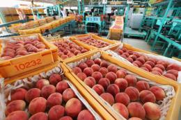 Nghị sĩ Hàn Quốc kêu gọi hạn chế nhập khẩu thực phẩm chế biến từ khu vực Fukushima