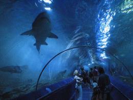 Công viên thủy cung cao nhất thế giới chính thức mở cửa đón khách
