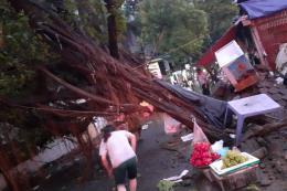 Giông lốc làm nhiều cây đổ gây chết người tại Hà Nội