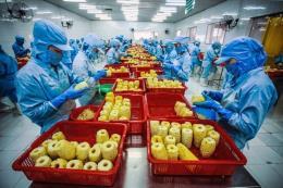 Bến Tre ban hành kế hoạch xuất khẩu nông sản chính ngạch
