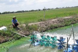 Đồng bằng sông Cửu Long đối mặt với nguy cơ hạn hán và xâm nhập mặn