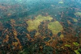 Diện tích rừng Amazon bị chặt phá lớn nhất trong 11 năm qua