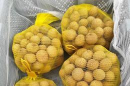 Nhãn Việt Nam sẽ có mặt tại thị trường Australia trong ngày hôm nay
