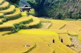 Thương mại điện tử giúp tiêu thụ hiệu quả nông sản