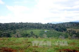 Nhiều sai phạm tại dự án đầu tư sản xuất nông lâm nghiệp tại Đắk Nông