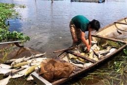 Hơn 130 tấn cá chết chưa rõ nguyên nhân trên sông Đại Giang