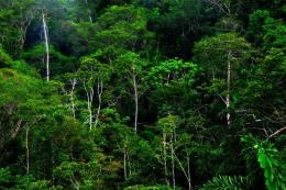 Doanh nghiệp không có chức năng vẫn được giao quản lý hơn 1.600 ha rừng