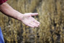 Nguyên nhân Trung Quốc hủy kế hoạch thăm các nông trại ở Mỹ