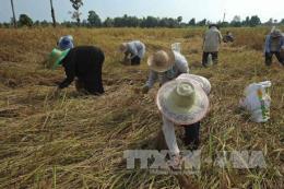 Thái Lan cần hơn 3,28 tỷ USD để hỗ trợ kinh tế nông thôn