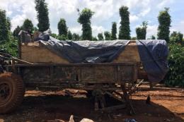 Phát hiện vận chuyển gỗ không rõ nguồn gốc, có dấu hiệu khai thác trái phép