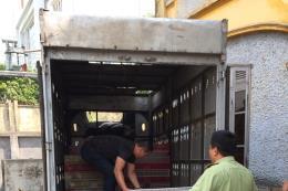 Tiêu hủy 3.800 con gà nhập lậu từ Trung Quốc