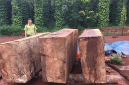 Bắt giữ khối lượng lớn gỗ cất giấu trái phép tại Đắk Nông