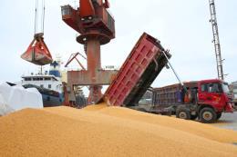 Giá nông sản Mỹ diễn biến trái chiều trong tuần qua