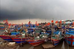 Nghị viện châu Âu: Việt Nam đã nỗ lực để gỡ bỏ thẻ vàng