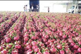 Thành lập đoàn công tác tới Lạng Sơn giải quyết tình trạng ùn ứ nông sản