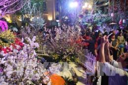 Sắp diễn ra Lễ hội Hoa anh đào Nhật Bản lần thứ 5 tại Hà Nội
