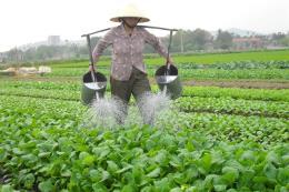 Thúc đẩy chế biến, tiêu thụ nông sản trong bối cảnh hội nhập