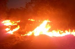 Cháy rừng lan rộng tại miền Nam Brazil