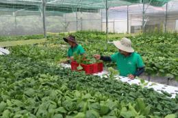 Để nông sản sạch đến tay người tiêu dùng