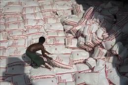 Cạnh tranh gay gắt về giá khiến ngành lúa gạo Thái Lan lao đao