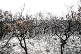 Cháy rừng tại Australia đang diễn biến rất phức tạp