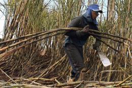 Thái Lan khuyến khích nông dân trồng mía áp dụng công nghệ mới