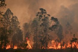 Lời cảnh báo về biến đổi khí hậu từ thảm họa cháy rừng ở Australia