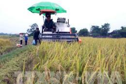Giải pháp giảm thiểu rủi ro cho sản xuất nông nghiệp