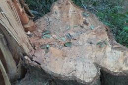 Vụ phá rừng đặc dụng tại Đắk Lắk: Làm rõ những điểm bất thường