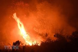 Thông tin chính xác thiệt hại vụ cháy rừng ở Uông Bí, Quảng Ninh