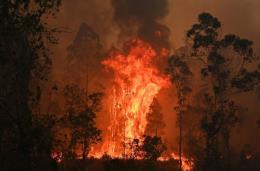 Cháy rừng hoành hành tại bang New South Wales, Australia