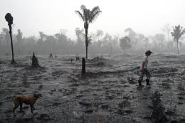Thêm hàng triệu USD hỗ trợ bảo vệ rừng Amazon