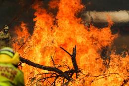 Cháy rừng ở Australia: Khí carbon phát ra ngang thảm họa cháy rừng Amazon