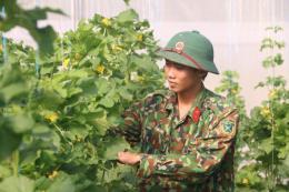 Mục sở thị vườn rau công nghệ cao của Trung đoàn Minh Đạm