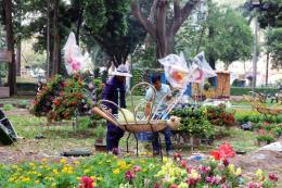 Khai mạc nhiều chợ Tết, hội hoa Xuân 2020