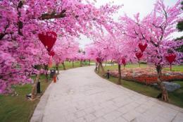 Lễ hội hoa xuân Vinhomes Smart City