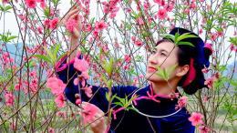 Lễ hội hoa Đào Xứ Lạng Xuân Canh Tý năm 2020