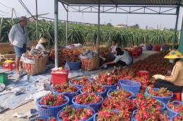 Việt Nam và Ấn Độ tháo gỡ khó khăn xuất khẩu nông thủy sản