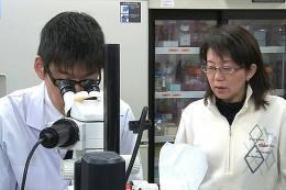 Nhật Bản thử nghiệm sử dụng tế bào gốc iPS chữa bệnh Parkinson