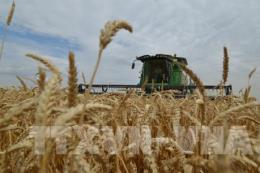 Giá lương thực thế giới tăng trong tháng đầu năm