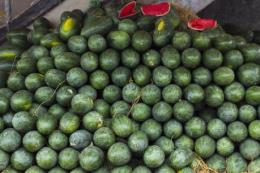 Sacombank hỗ trợ nông dân tiêu thụ dưa hấu