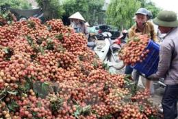 Bắc Giang lựa chọn, phát triển nhiều sản phẩm OCOP