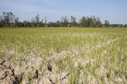 Hạn mặn ở Đồng bằng sông Cửu Long - Bài 1: Diễn biến phức tạp, khó lường